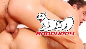 Bad Puppy